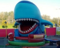 Happende haai